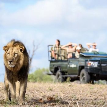 Sabi Sabi Little Bush Camp Accommodation Activities Safari Drives