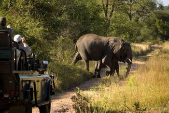 Narina Lodge Game Drives