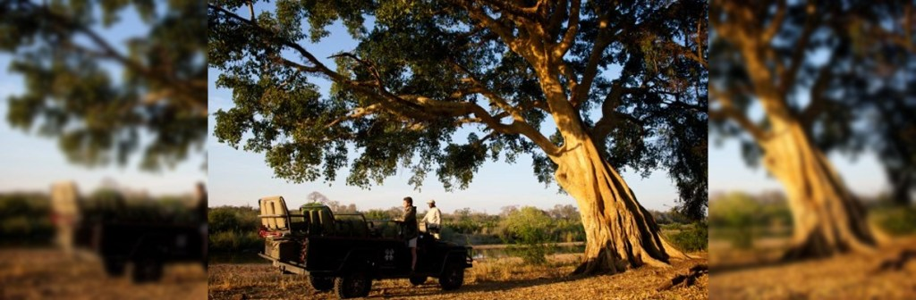 Londolozi Pioneer Camp Game Drive Stop