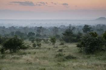 Londolozi Varty Camp Vast View