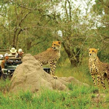 MalaMala Main Camp Accommodation Activities Leopards