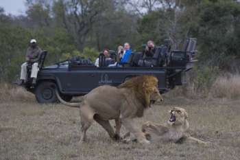 Dulini Lodge Lion Sightings