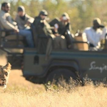Singita Castleton Accommodation Activities Game Drives