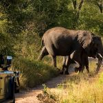 Lion Sands Treehouses Elephant Crossing Road Game Drive