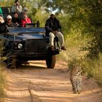 Lion Sands Treehouses Leopard Game Drive