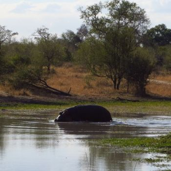 Djuma Vuyatela Lodge View Of Hippo