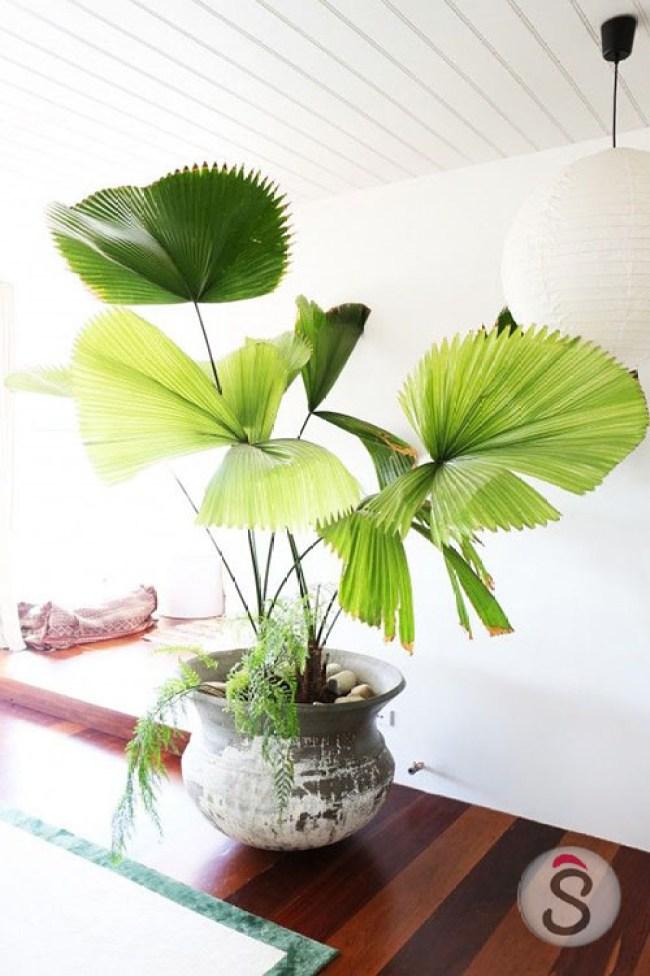indore plant