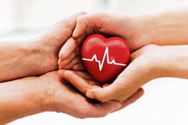 Holy Basil (Tulsi) Top 7 Health Benefits (4)