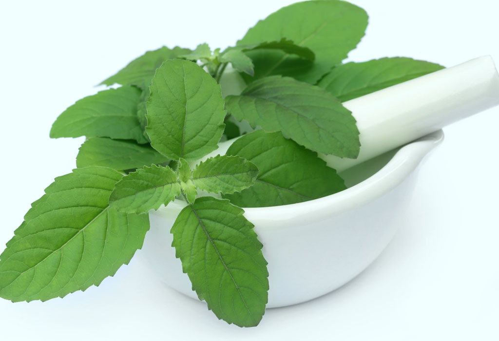 Holy Basil (Tulsi) Top 7 Health Benefits (7)