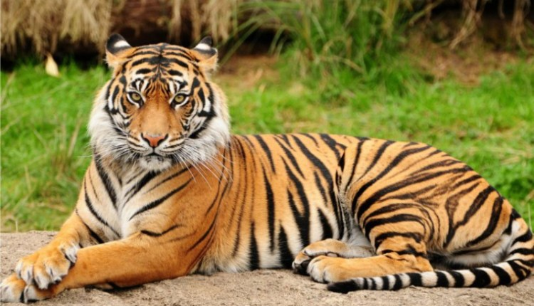 These are the world's most powerful and dangerous animals