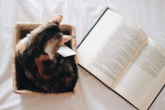 Kitten+Book.