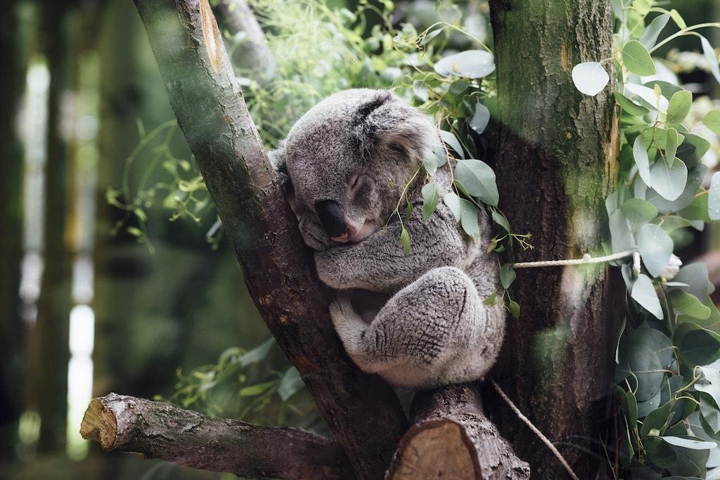La lista degli animali australiani cosa c è da sapere e dove trovarli