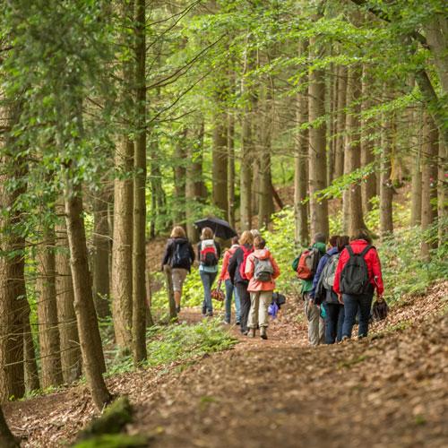Randonnées pédestres en forêt, une des nombreuses activités offertes à l'hôtel Sacacomie. Plusieurs sentiers aménagés disponibles.