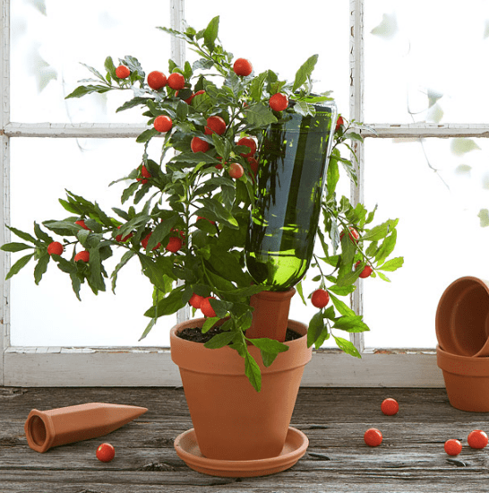 Uncommon Goods_Valentines Day Gifts_Plant Nanny