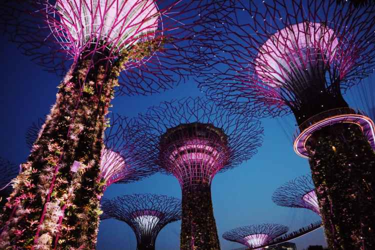 low angle photography of gardens by the bay