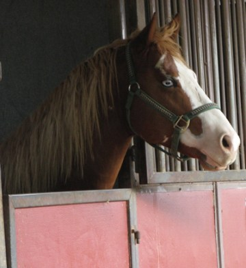 National Equine Resource Network Low-Cost Gelding Clinic