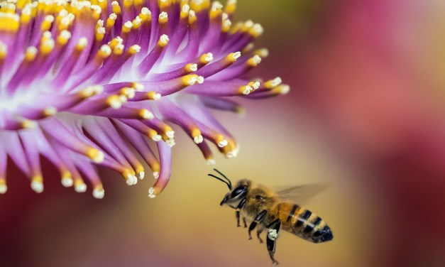 Bee Extraordinary