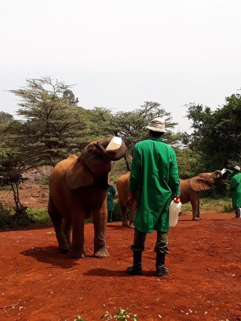 Orphaned Elephants