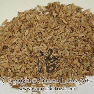 Chinese Herb: Xiao Hui Xiang (Fennel Fruit), Fructus