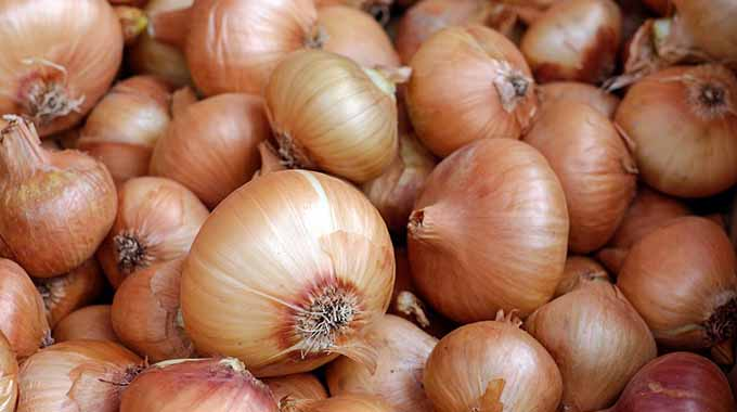 Preventing Cold and Flu Using Onions