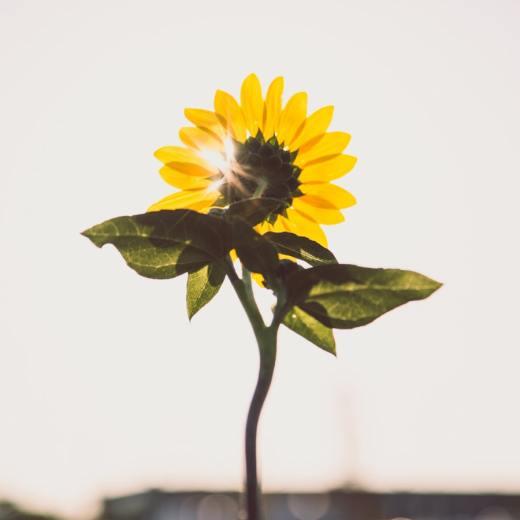 Solar Plexus Chakra Basics by Timmie Horvath (Wanechko Policarpio) - The Sacred Wellness School of Healing Arts | Edmonton Reiki Training, Crystal Healing Certification, Chakra Therapy Certification, Aromatherapy, Essential Oil Safety