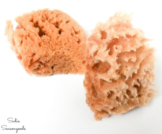 Natural sea sponges from the craft store for craft painting