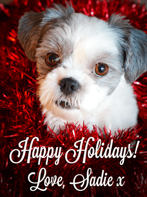 Happy holidays from Sadie Shih Tzu