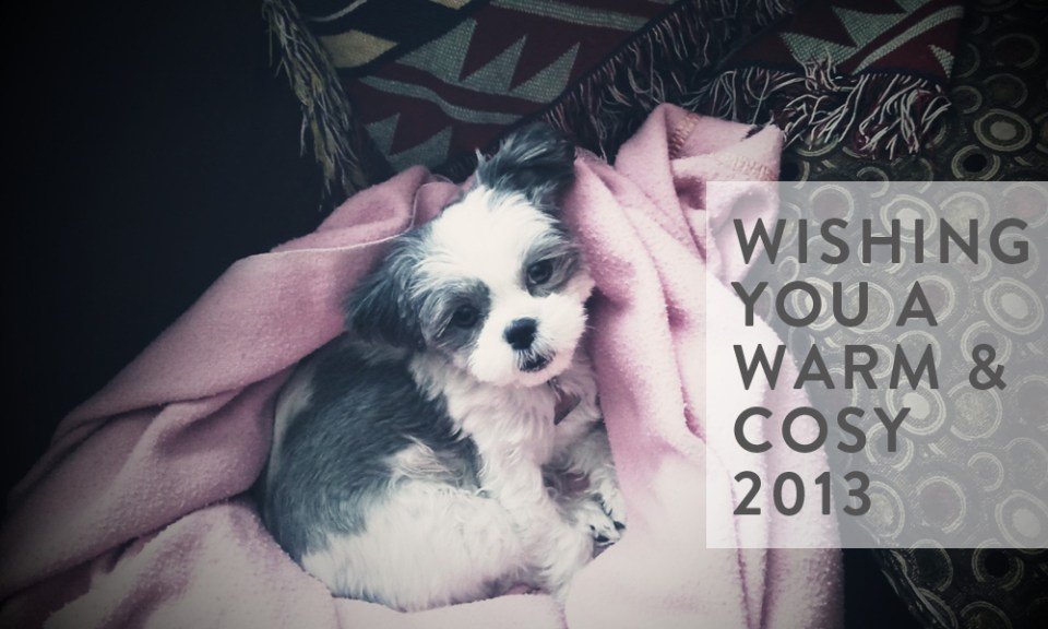 Sadie-Shih-Tzu-happy-2013