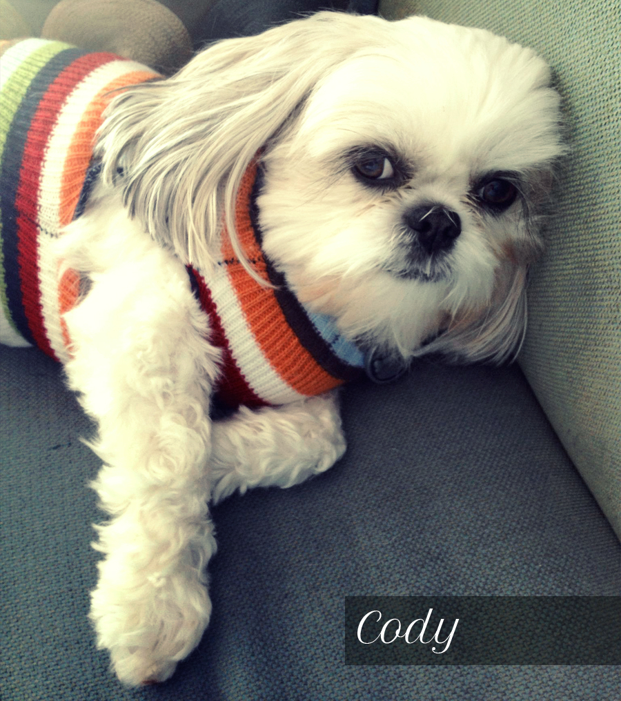 Cody-Pierce,-the-Sassy-Shih-Tzu