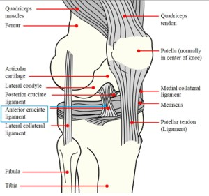 Risk of ACL injury