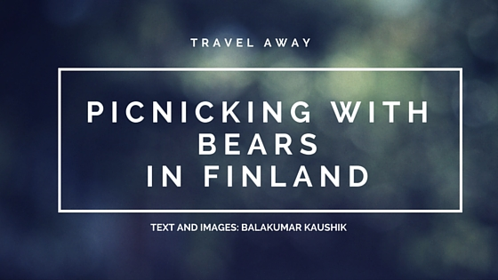 Photographing Brown Bears in Finland