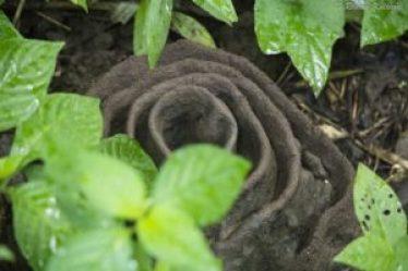 Harvester Nest