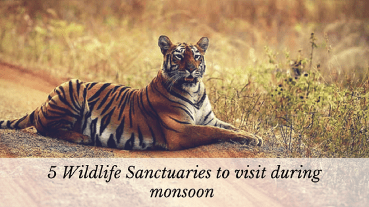 Wildlife Sanctuaries to visit during Monsoon