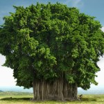 Saevus banyan-tree A shelter for 10,000 people? - Meet our National Tree Conservation Day's Special  Van Mahotsav K.M. Munshi Giver of Life Bhagwad Geeta Banyan tree