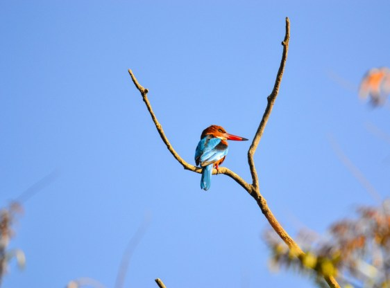 'BANGALORE'S OWN BIRD SANCTUARY' NEEDS YOUR ATTENTION