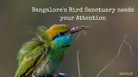 Bangalore's own Bird Sanctuary needs your Attention