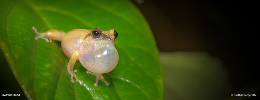 Frog Agumbe_travel guide