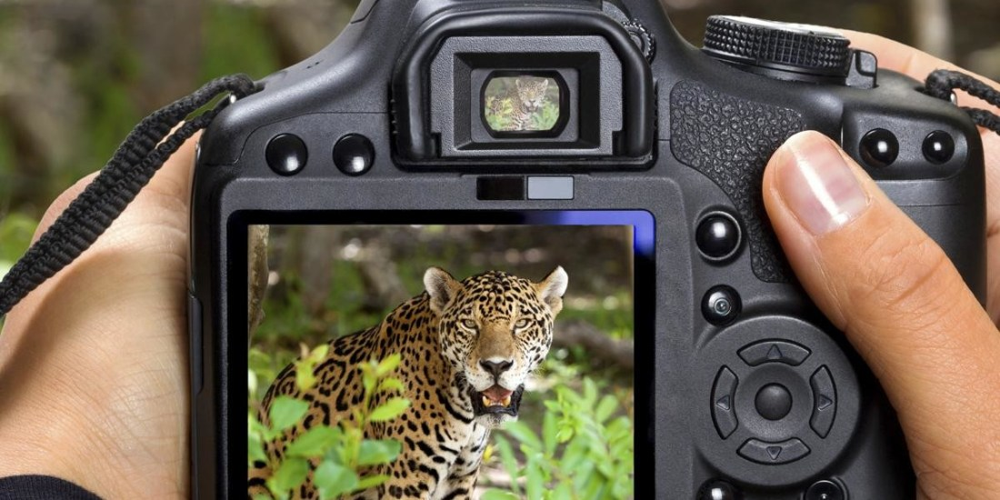 Saevus 1200-18697089-wildlife-photography Basics of photography - from Auto mode to Manual mode Photography  Photography DSLR