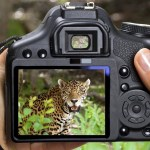 Basics of photography - from Auto mode to Manual mode