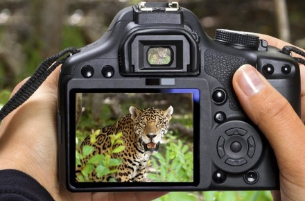 Saevus 1200-18697089-wildlife-photography-440x290 Online Portal of SAEVUS Magazine