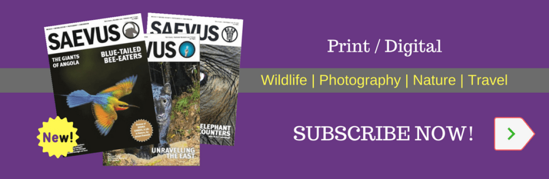 Saevus Copy-of-Magazine-promo-300x98 Diving deep into the secrets of the world beneath Photography Tete - A - Tete  Wildlife Photographer of the Year Tete - A - Tete MAR-ECO Land Of The Tiger Interview David Shale crab BBC Bat fish juvenile Atlantic ocean