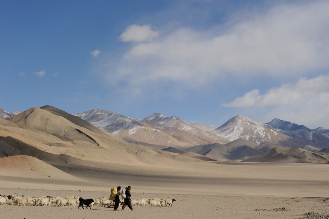 Girls with their herd and a dog are moving towards a grazing ground. These dogs have immense sense of responsibility and one is usually enough to look after a herd of 200. Its primary duty is to keep eyes on straying and distracted members of the herd.