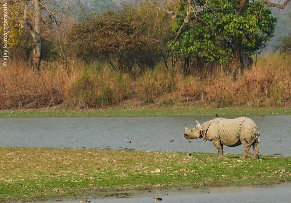 Assam to observe 'Rhino Day' on September 22