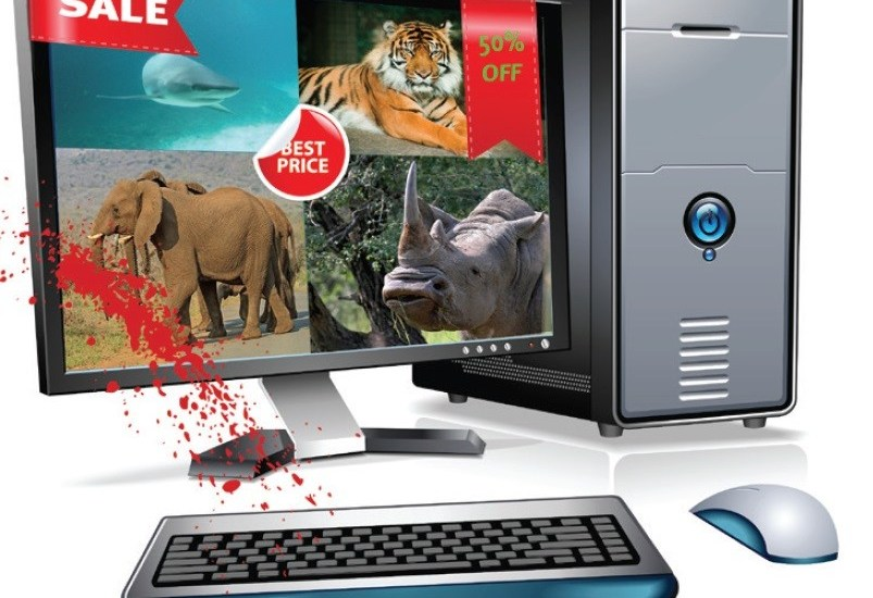 Saevus pc When a mouse kills an elephant Conservation  wildlife trade trade Tiger Skin Snake Skin Peddling Indian
