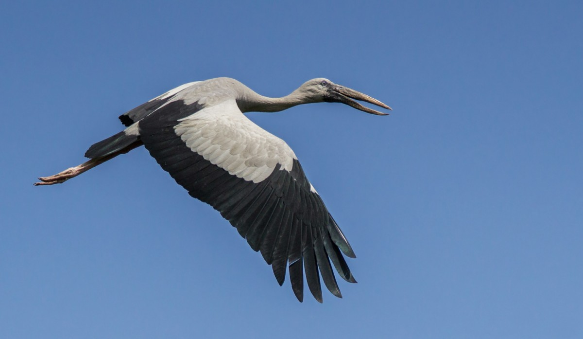 Painting the sky black and white