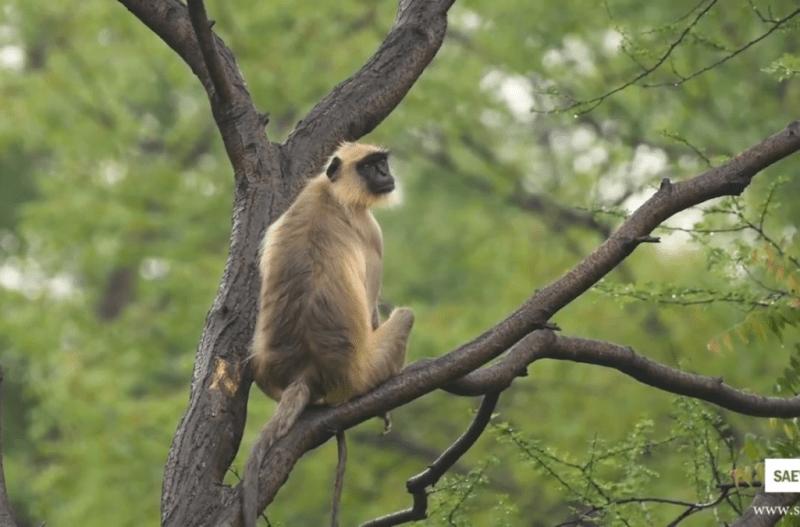 Magazine | Wildlife | Conservation | Photography | Travel | Natural History