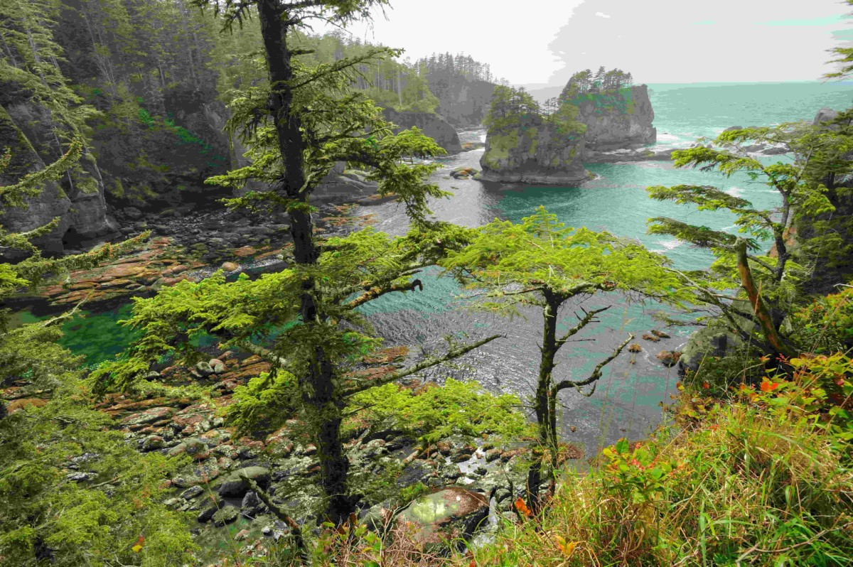 The Olympic National Park harks back to an era gone by, with brilliant landscapes and ancient trees that took root more than 200 years ago…