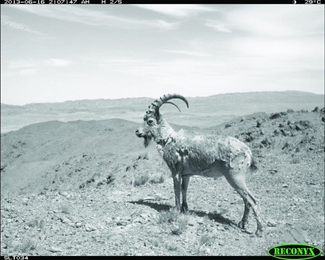 Camera trap images from the Nemegt and Sewrei mountain ranges.