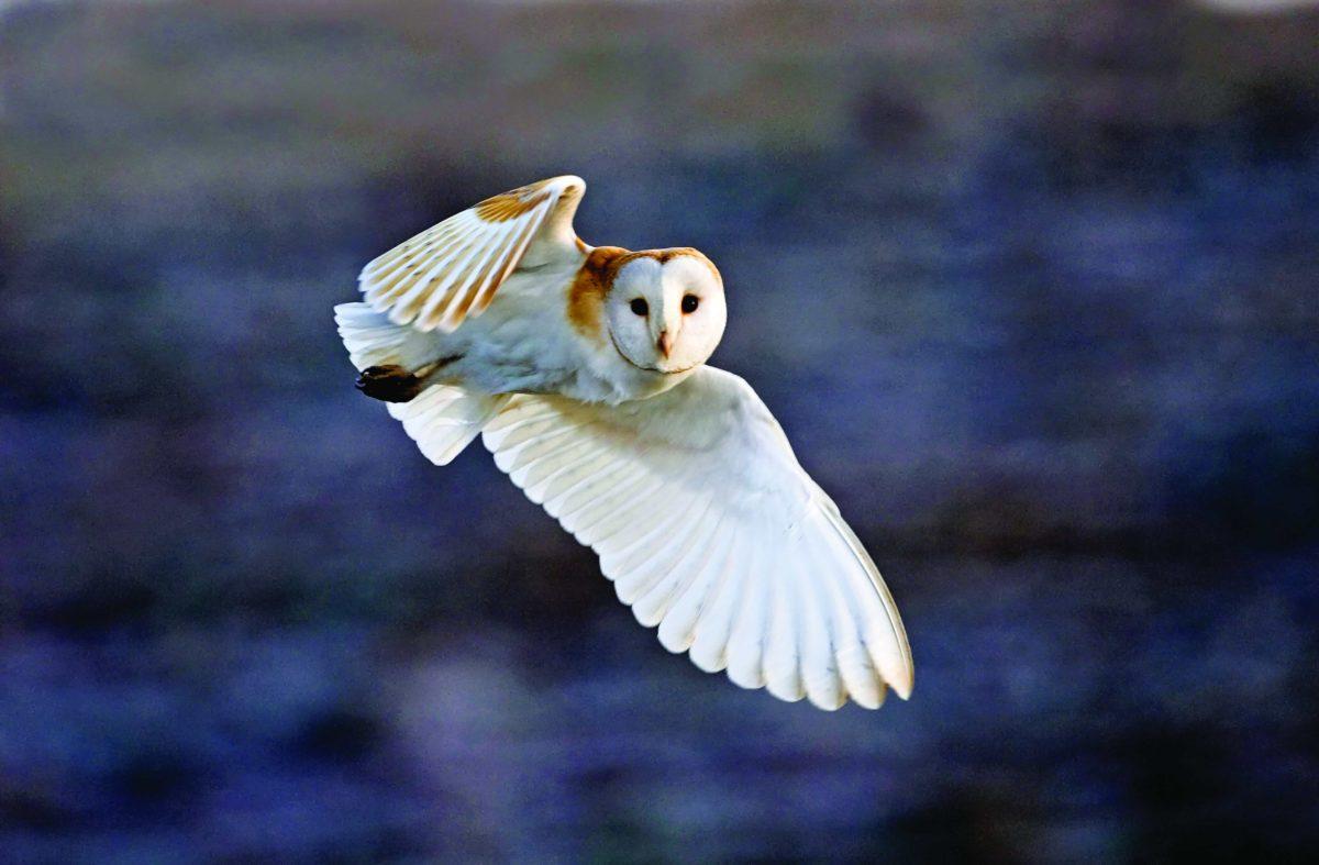 Winged wonders of the wild