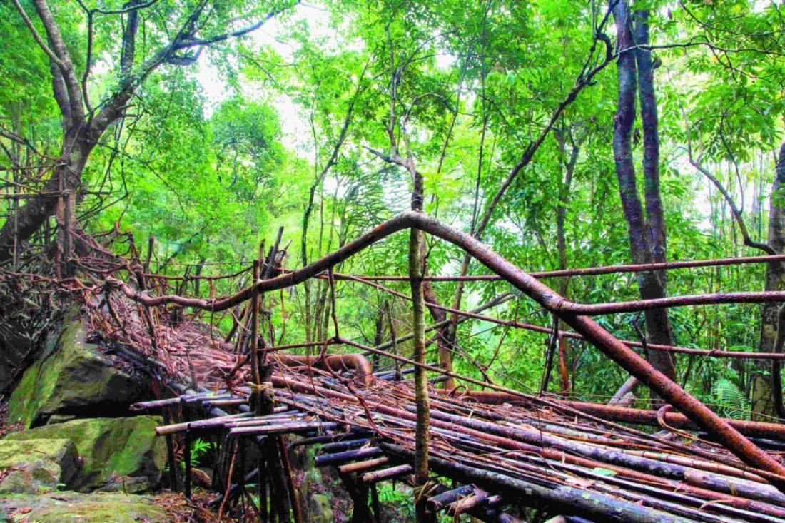 Umshiang Double-Decker Root Bridge
